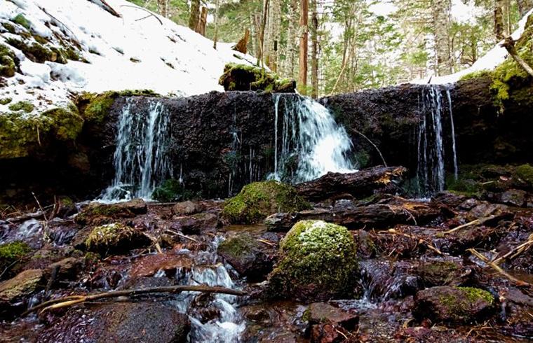 【どうみん割適用商品】阿寒の森の水巡り プレミアムツアー(冬季) | TSURUGAアドベンチャーベース【SIRI】